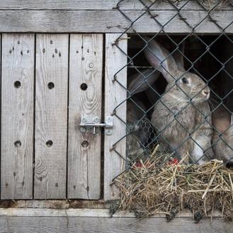 aménager la maison du lapin