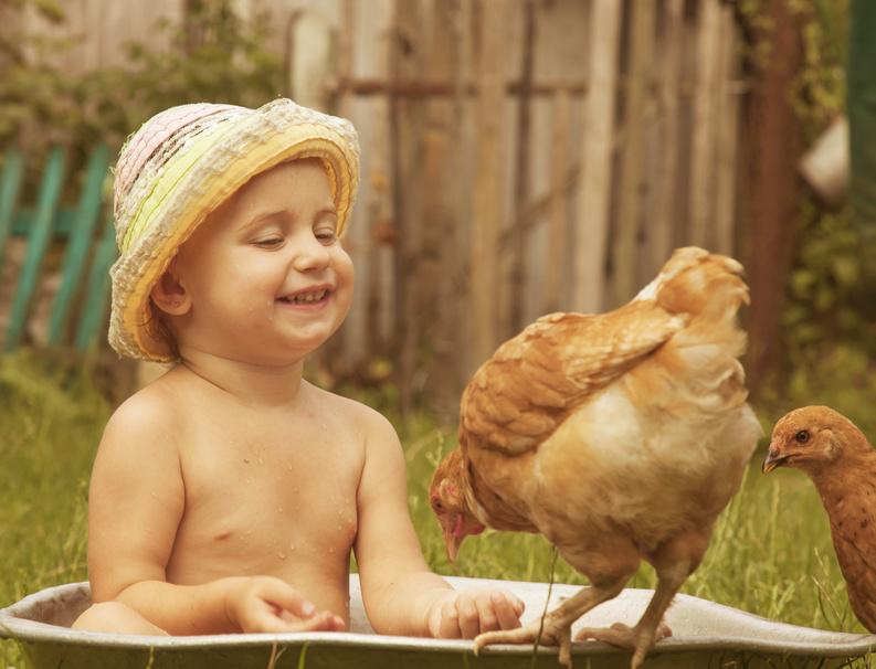 avoir une poule, une bonne idée?