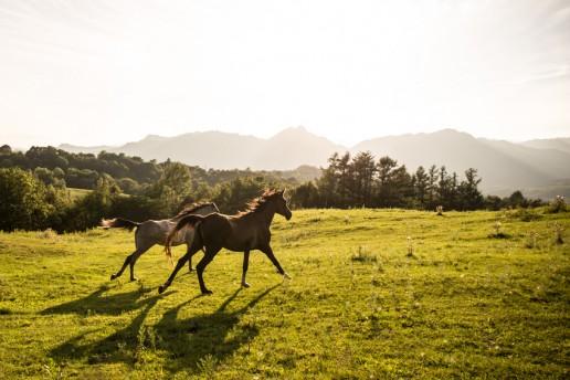 prendre soin des sabots de mon cheval