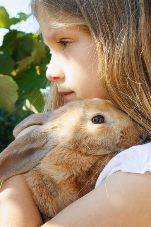 aux petit soins de mon lapin